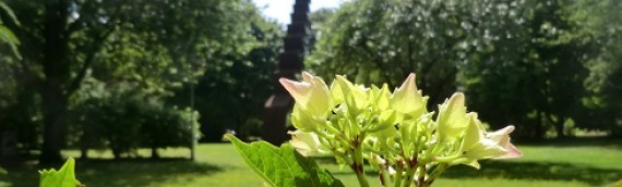 Musik und Poesie im Kirchengarten